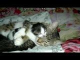 «Семейство кошачьих» под музыку Детские песни из мультиков - Песенка кота Леопольда: Все на свете можешь ты!. Picrolla