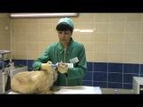 Как правильно чистить зубы собаке дома